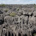 Forêt de Tsingy