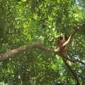 Lemurien de Tsingy